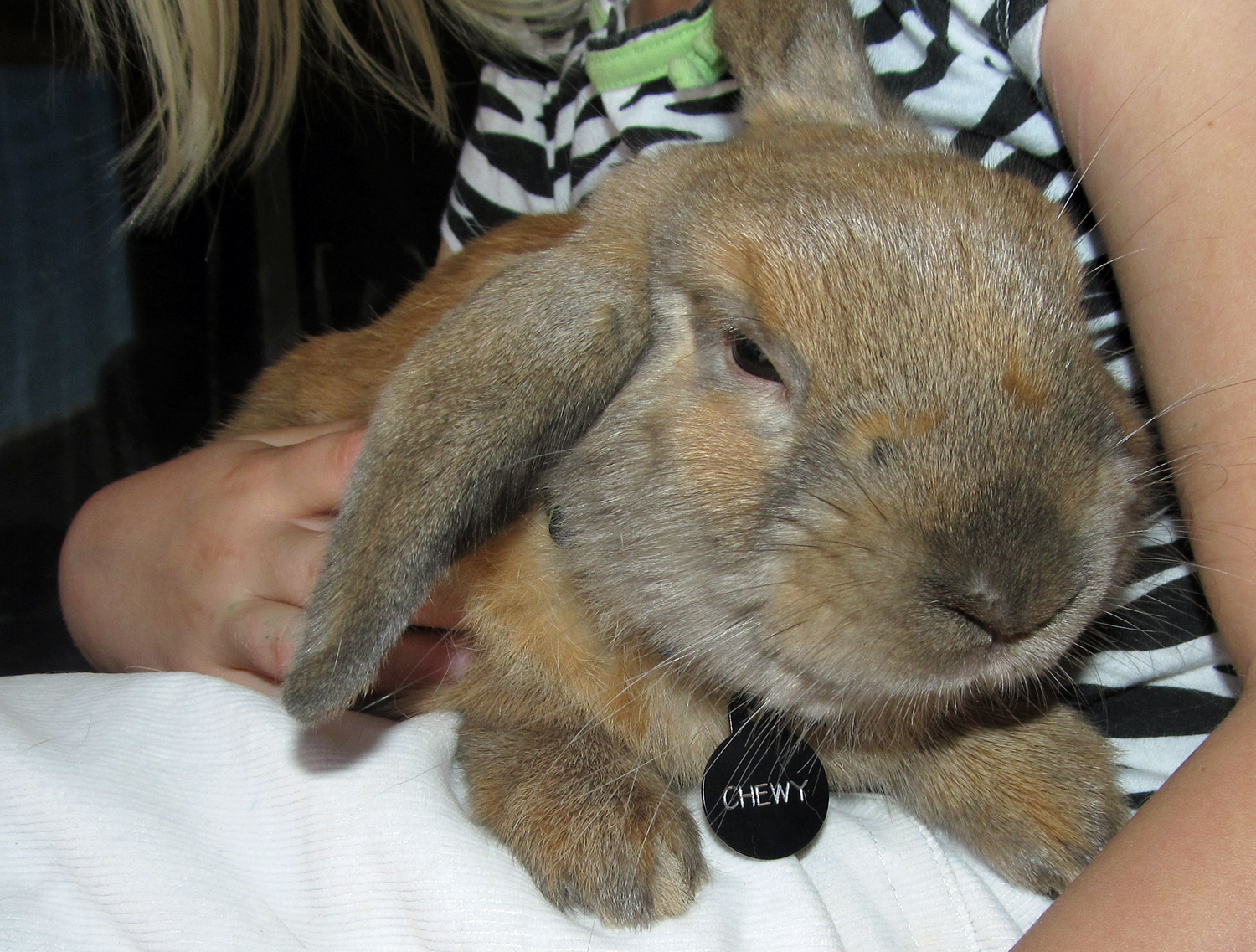 Chewy the Rabbit